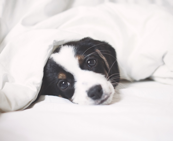 How to achieve better sleep for you and your dog